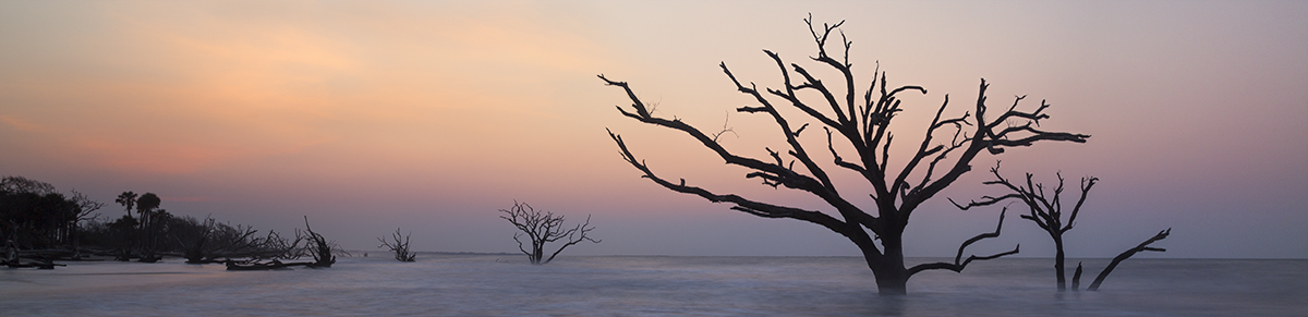 Dead Trees in Botany Bay, SC