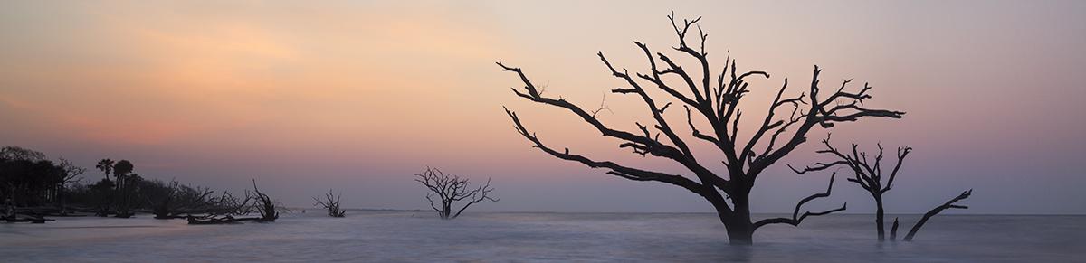 Dead Trees in Botany Bay, SC